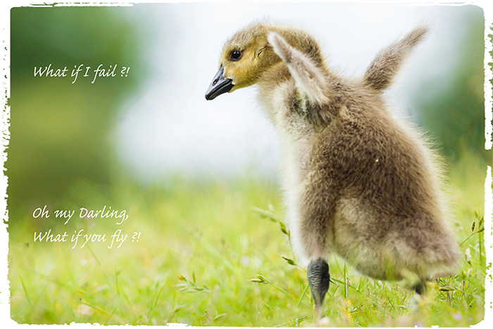 Postkarte von Anne Maike Winter: What if I fail? Oh my Darling, what if you fly?