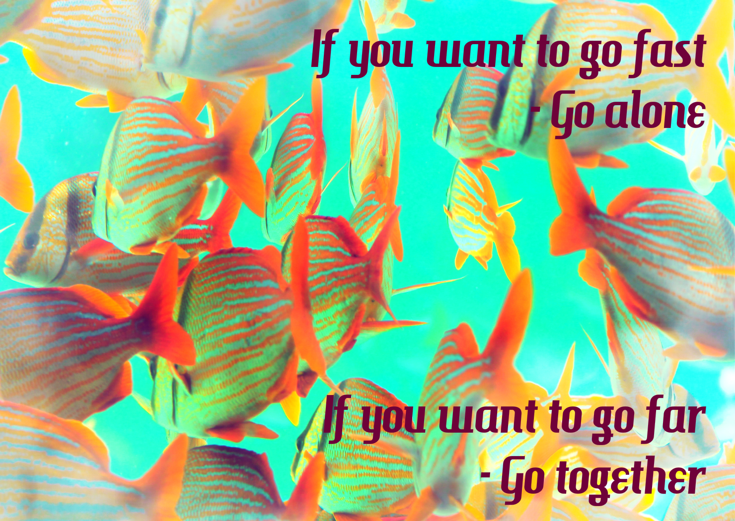 If you want to go fast - Go alone. If you want to go far - Go together.